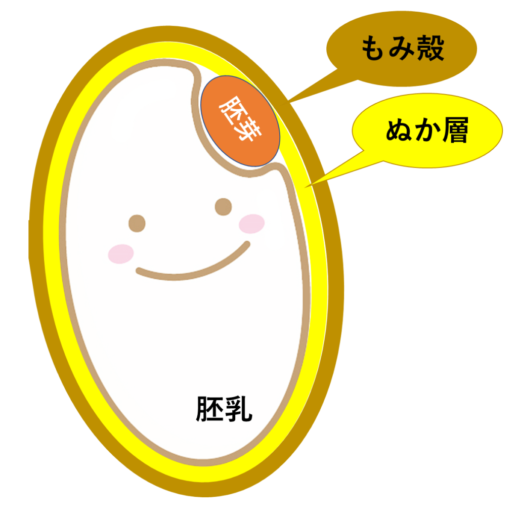 胚芽米と分つき米、何が違う?
